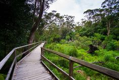 Exploring Warriewood Wetlands on the Northern Beaches (Australia)