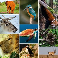 The world is full of wonderful creatures, big and small. #WorldWildlifeDay #TravelResponsibly