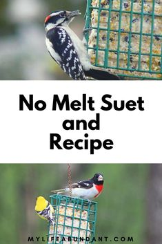 Make your own suet recipe and watch the birds flock to your feeders. Its easier than you think and also learn about No Melt Suet Suet Bird Feeder, Bird Seed Feeders, Bird House Feeder, Best Bird Feeders, Wild Bird Food, Wild Birds, Suet Recipe, Suet Cakes, Bird Seed Ornaments