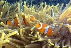 Pacific Ocean takes perilous turn   Sea Change: Ocean acidification   The Seattle Times