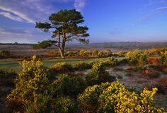 New Forest Landscapes : Gorse at Bratley View Emigrate To Australia, Forest Landscape, New Forest, English Countryside, Landscape Photos, Hampshire, Scenery, England, Places