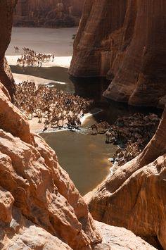 Camel Canyon, Ennedi Desert, Chad (Central Africa)