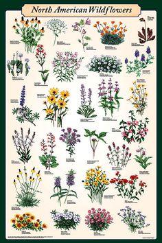 North American Wildflowers