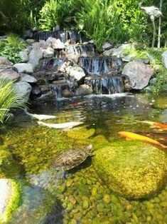 Koi Pond Design, Pictures, Remodel, Decor and Ideas - page 9