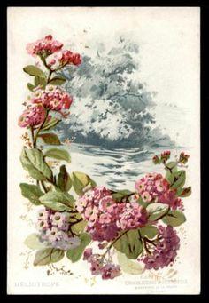 Chromo Aiguebelle Fleurs ET Paysages Heliotrope