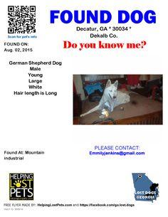 Found Dog - German Shepherd Dog - Decatur, GA, United States