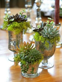 Glitzy Old Glasses:If your old, decorative glasses aren't holding water anymore, have them hold plants such as drooping string of pearls, reindeer moss, and miniature succulents.