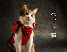 ペット鎧 Cat Armor, Cute Cats, Funny Cats, Animals And Pets, Cute Animals, All Types Of Cats, Medieval Fantasy, Character Outfits, Cat Life