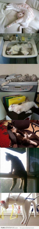 Cats: If I fits I sits