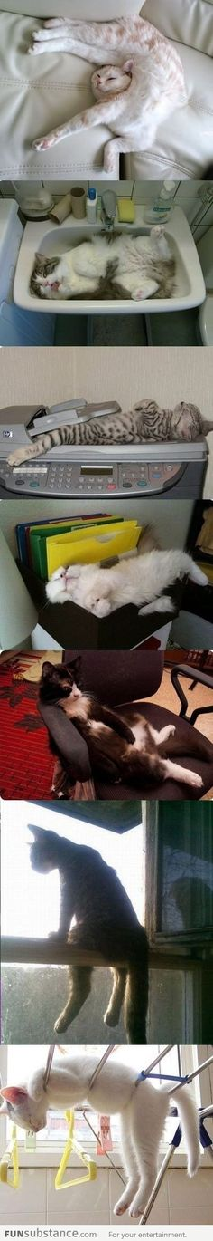 Cats: If I Fits, I Sits Wow - this is so cat behavior! Such odd critters - alergic and love them!