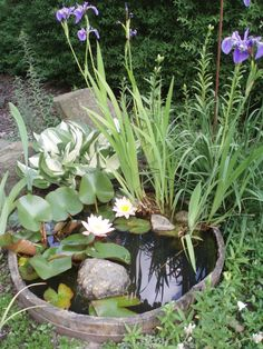 Fresh Mini Ponds For Little Garden Ideas Lovely mini pond from a small wooden barrel. I searched for this on /imagesLovely mini pond from a small wooden barrel. I searched for this on /images Ponds For Small Gardens, Little Gardens, Small Ponds, Patio Pond, Ponds Backyard, Backyard Ideas, Pond Plants, Water Plants, Aquatic Plants