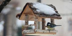 Vogelhaus bauen: Bauanleitung