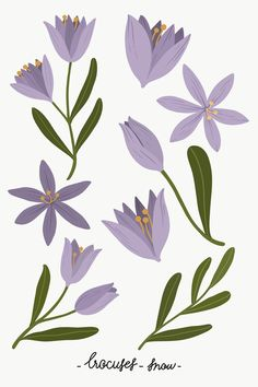 Iris Flowers, Botanical Flowers, Purple Flowers, Purple Iris, Clematis Flower, Peach Background, Guache, Plant Illustration, Flower Illustration Pattern