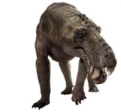 Recreation of Gorgonops. This therapsid lived 250 million year ago, in the late Permian. Long before the dinosaurs and mammals, this beast roamed the earth.