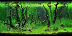 аквариумные сады: 21 тыс изображений найдено в Яндекс.Картинках