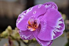 Nekvetou vám orchideje? Pomoc může přijít z nečekané strany   Naše zahrada
