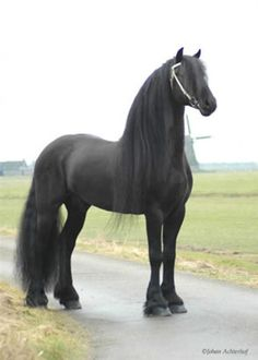 Top 20 Most Beautiful Horses In The World https://play.google.com/store/music/artist?id=Aoxq3iz645k55co23w4khahhmxy&feature=search_result