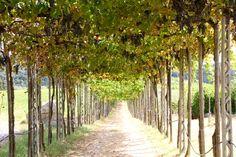Borgo San Felice, Tuscany.