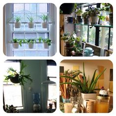 EXTRA ITEM - Plants. Edible and non-edible. In windows, hanging baskets, on worktops, trailing down cabinets. Whatever. Must have plants - 10 Kitchen Essentials
