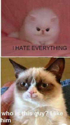Cute Animal Memes, Funny Animal Quotes, Animal Jokes, Cute Funny Animals, Cute Baby Animals, Cute Cats, Funny Quotes, Grumpy Cat Quotes, Funny Grumpy Cat Memes