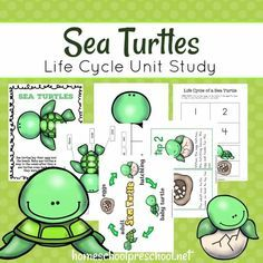 Studying marine life is exciting for kids! If your preschoolers are interested in sea turtles, it might be time for a sea turtle life cycle unit study! Free Preschool, Preschool Themes, Preschool Lessons, Ocean Habitat, Turtle Habitat, Sea Turtle Life Cycle, Reptiles, Amphibians, Turtle Book