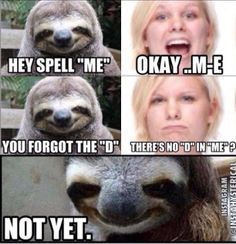 sloth pick up lines