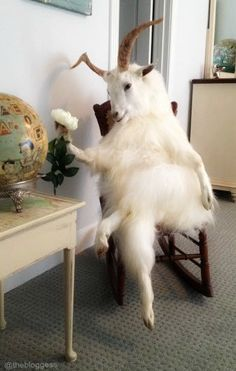 Goats are the new vases: http://thebloggess.com/2015/05/totes-magoats/