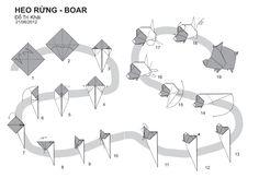 Diagram-Lợn-Rừng-Boar-Đỗ-Trí-Khải