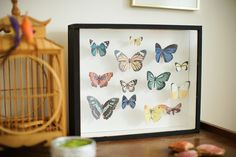 Boîte a papillons Diy