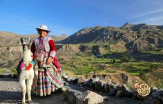 Colca, Peru - January 16, 2015: Local woman with llama standing at Colca Canyon in Peru. It is one of the deepest canyons in the world with a depth of 3,270 meters.
