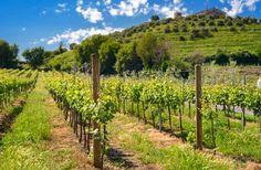 10 Italian Wine Regions You Need to Visit