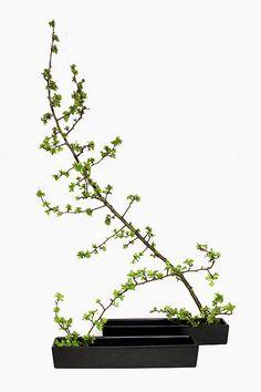 Bonsai tree-like ikebana Ikebana, Ancient Japanese Art, Japanese Maple, Flower Decorations, Flower Designs, Bonsai, Flower Arrangements, Scene, Plants