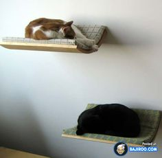Floating cat beds