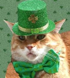 st patrick's day kitties - Google Search