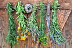 Kräuter und Blumen zum trocknen aufgehangen.