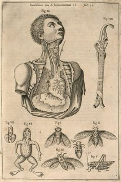 "nends: "" Athanasius Kircher - Musurgia Universalis Sive Ars Magna Consoni Et Dissoni "" Medical Drawings, Medical Art, Medical Design, Medical History, Medical Illustrations, Medical Jokes, Medical Icon, Ink Illustrations, Human Figure Drawing"
