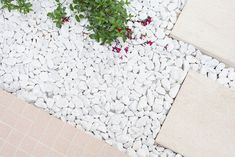 studio heju refurbish secluded courtyard in paris for french clothing brand des petits hauts Dream Garden, Home And Garden, Paver Pathway, Architecture Parisienne, French Clothing Brands, Fish Ponds, Blog Deco, Flowers Perennials, Outdoor Landscaping