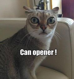 Can Opener!
