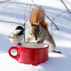 Squirrel and bird with mug in the snow