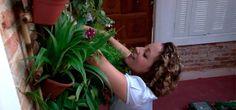 A jornalista e jardineira Carol Costa, do portal MINHAS PLANTAS, ensina neste vídeo como montar um jardim vertical e quais espécies escolher para eles.