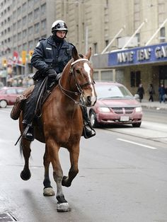 After 12 years of devoted service, Royal Sun, a crossbreed, was severely injured Sunday while patrolling the Entertainment District. Work With Animals, Pony Horse, Broken Leg, Men In Uniform, Types Of Horses, Horse Photography, Working Dogs, Wild Horses, Beautiful Horses