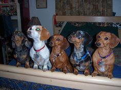 Home - Flagstaff Doxies