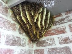 Open air Honey Bee hive