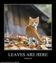 20 Cute and Funny Animal Fall Pictures You'll Love More than PSL #fallmemes #cutememe #cuteanimals #funnyanimals #animalmemes Funny Animal Jokes, Funny Animal Pictures, Animal Memes, Funny Animals, Cute Animals, Cute Funny Dogs, Haha Funny, Funny Cats, Fall Pictures