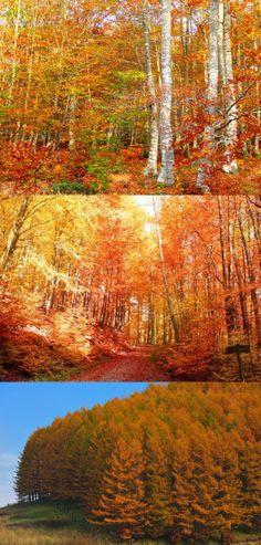 *** Autumn forest ***