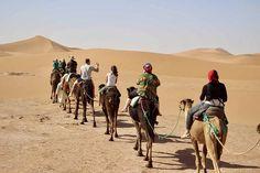Wild Camp, Desert Tour, The Dunes, Day Tours, Marrakech, Trekking, Wilderness, Camel, Beautiful Places