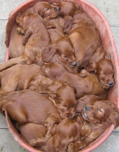 ohhhh! basket of puppies! Oh, I love these  sweet babies