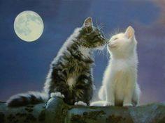 L'amour au clair de lune, meaowwwww