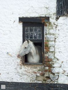 A curious horse adds to the intrigue of the old window