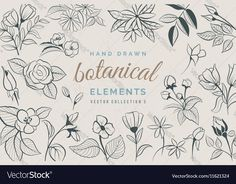 Collection of hand drawn botanical elements. Download a Free Preview or High Quality Adobe Illustrator Ai, EPS, PDF and High Resolution JPEG versions.